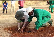 bg-plantering