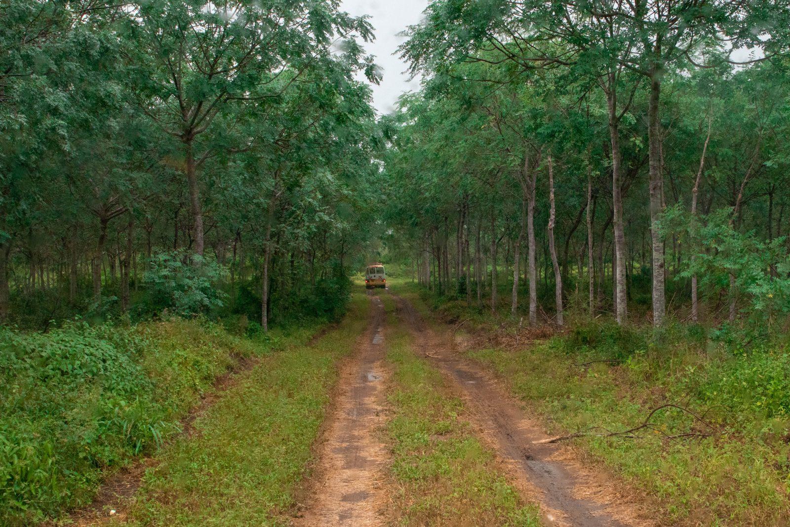 Busstur genom Nyongoro-plantagen