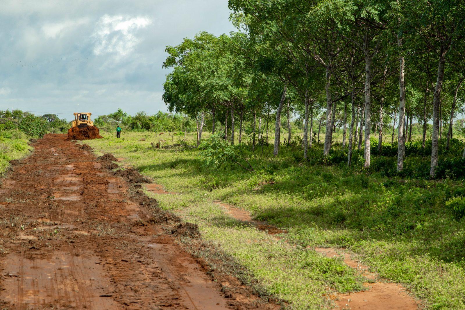 Här syns en bulldozer som gör markberedning inför plantering av fler Mukau-träd på Nyongoro-plantagen.