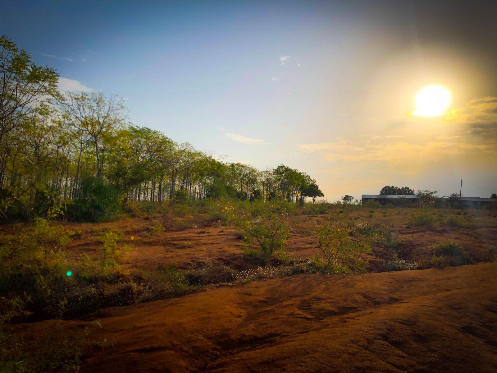 Solnedgång över gränsen mellan plantagen och skolan vid Kiambere-plantagen. Samma plats som visas i en av drönarbilderna.
