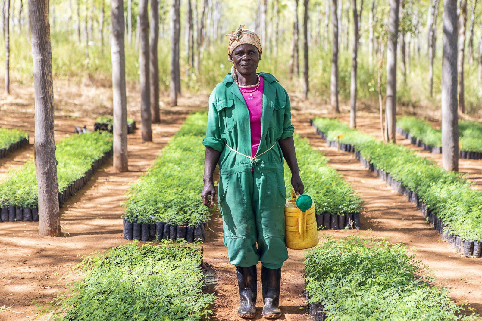 Kvinna i plantskolan i Kiambere. Bild från 2018 av en kollega till mig Marcus B.