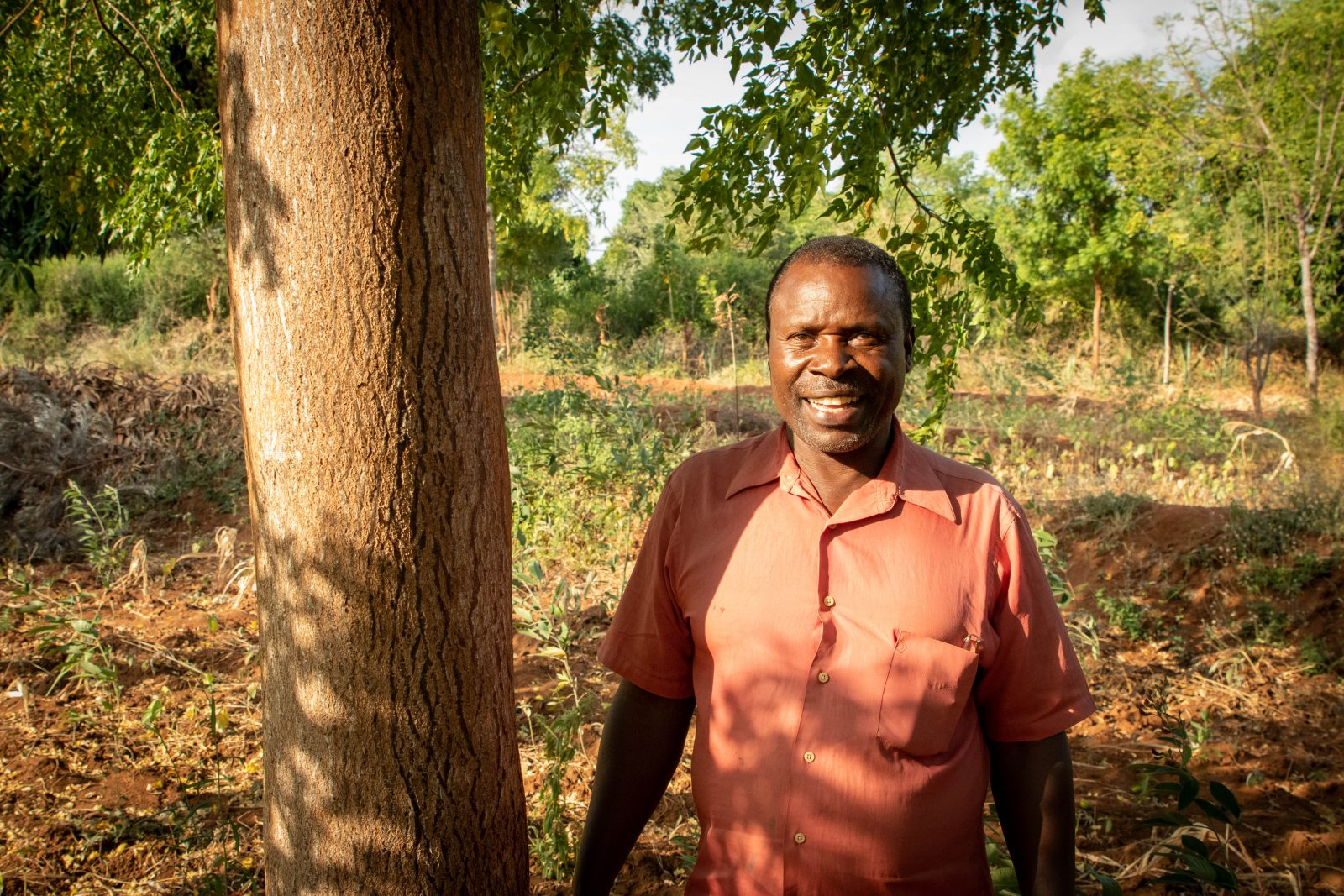 Partner-bonden Sospeter Musioki Mutisoki tillsammans med ett 6 år gammalt Mukau-träd på sin gård.