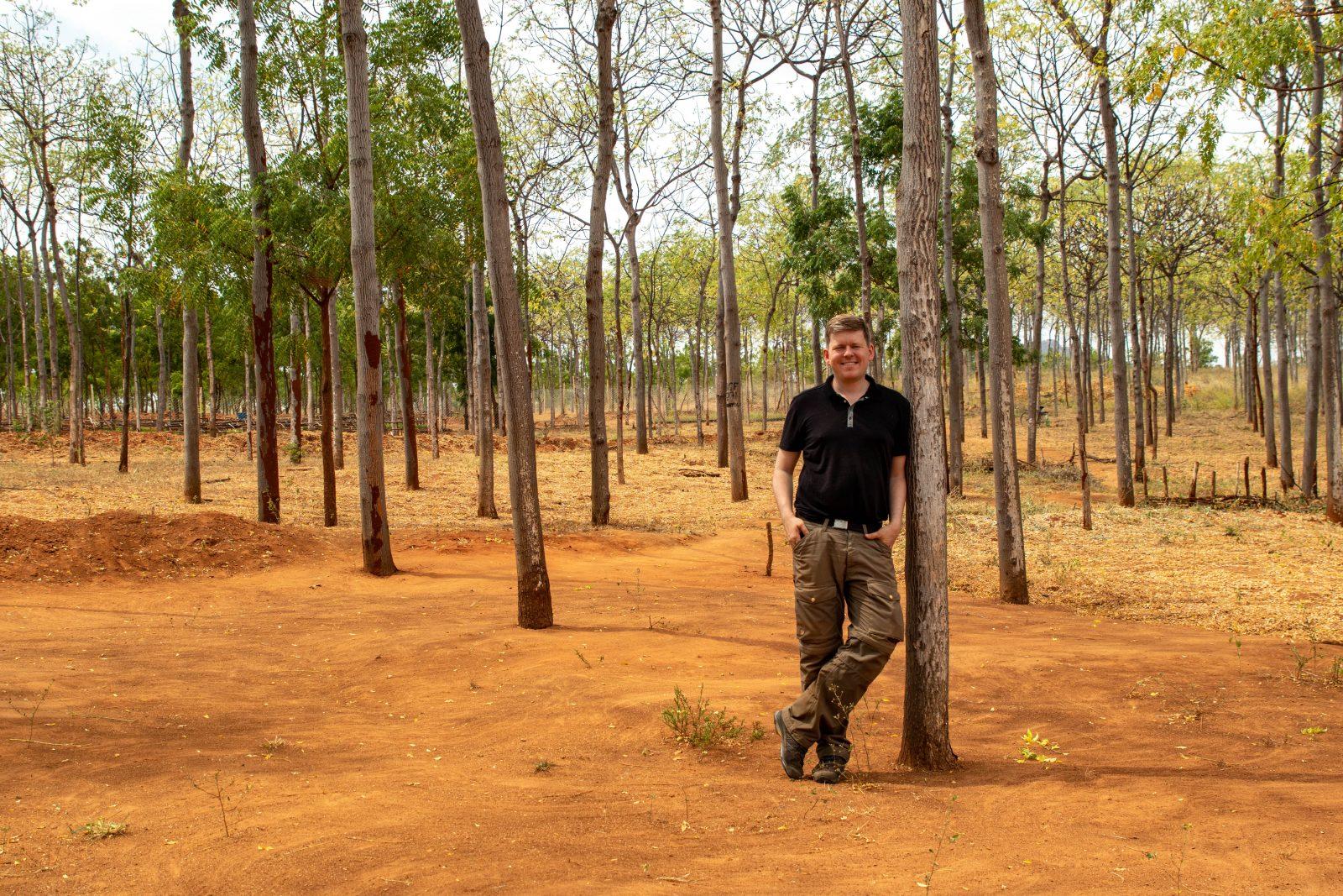 Rader av Mukau-träd framför plantskolan i bakgrunden vid Kiambere-plantagen. Notera den torra röda sanden som träden växer i. Den är typisk för den kenyanska semi-öknen.