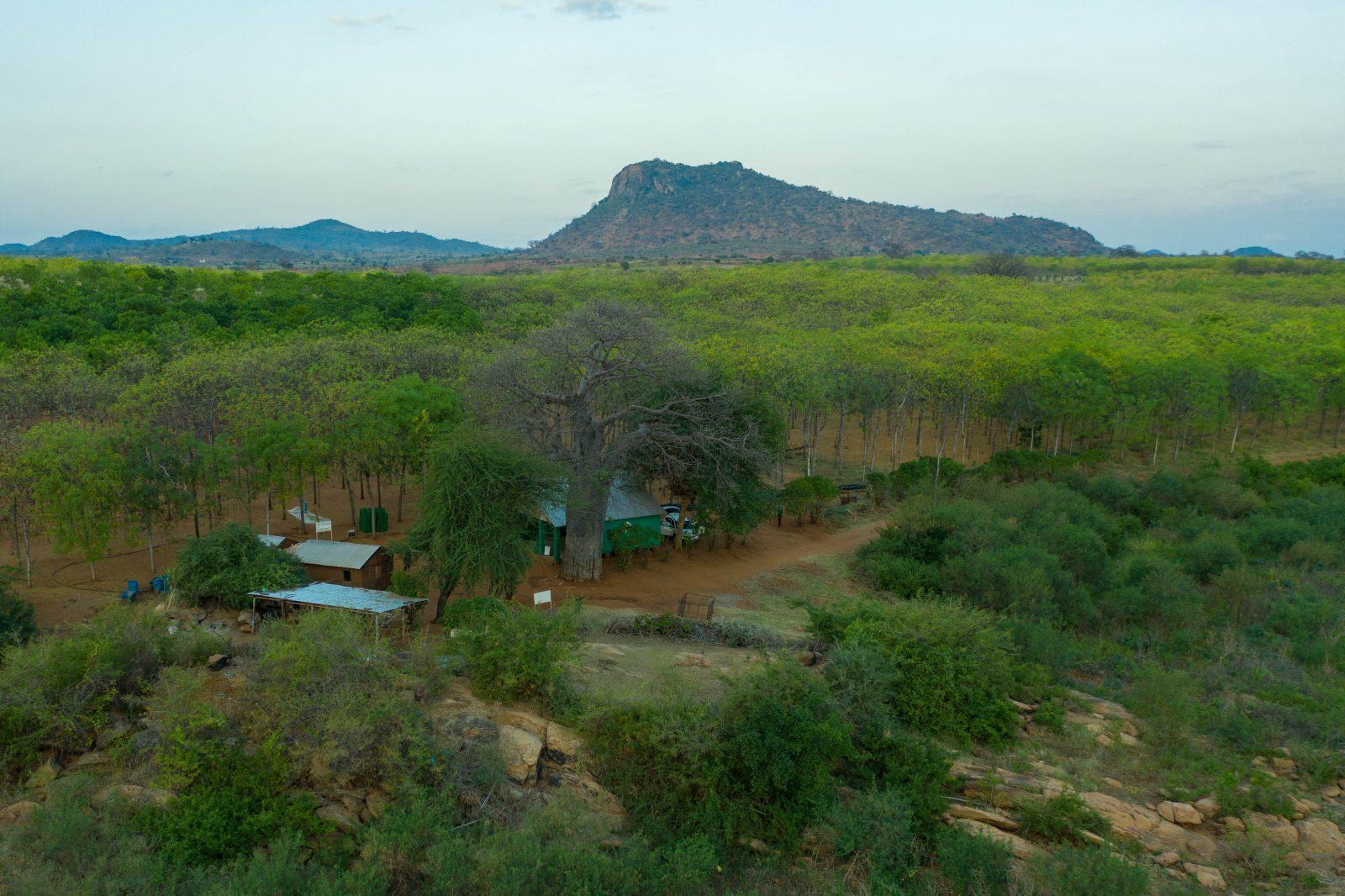Drönarbild över kontoret på Kiamberre-plantagen vid Kiambere-dammen.