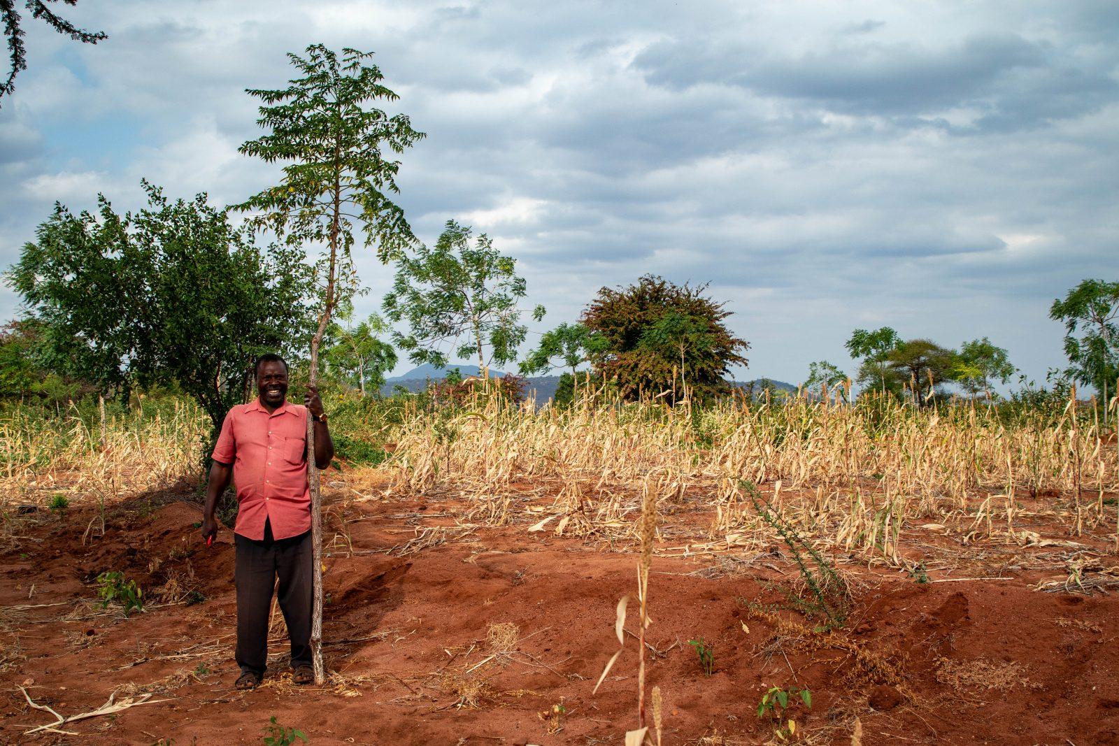 Partnerbonden Sospeter Musioki Mutisoki med ett två år gammalt Mukau-träd på sin gård.